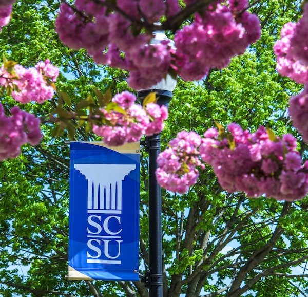 SCSU flag by tree